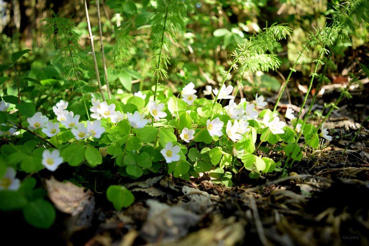 Картинки и названия цветов в лесу
