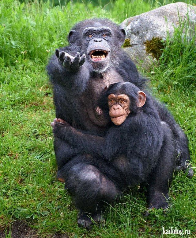 Открыток амели, самые смешные картинки про животных но только про животных