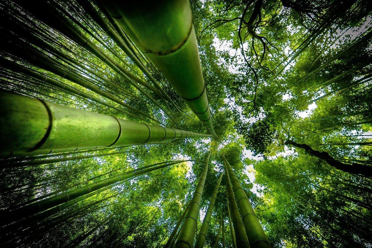 толкают цели картинки бамбук для телефона лакомство просто