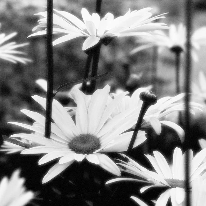 менее вдохновляющие черно-белые картинки диктант