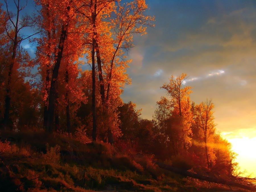 Природа осенью  становится настоящим волшебником