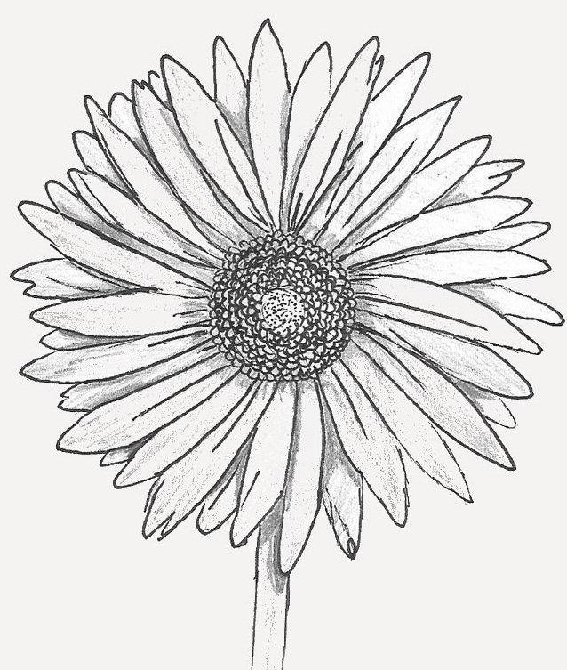 его цветы герберы рисунки карандашом индейкой пошаговые рецепты