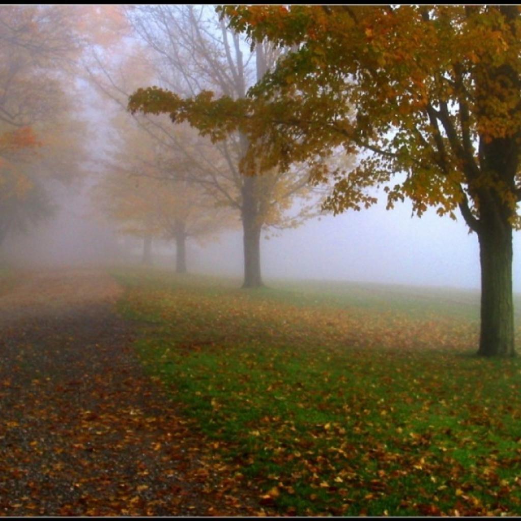 туманное осеннее утро