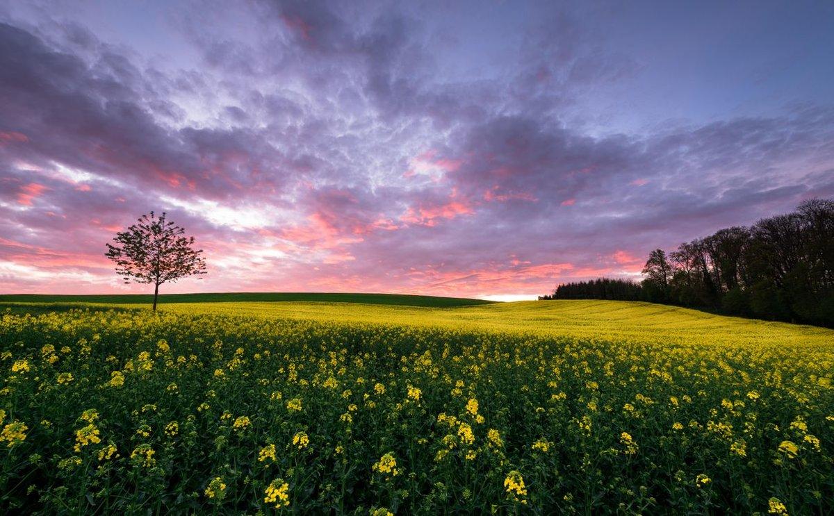 Картинки поля с цветами и деревьями