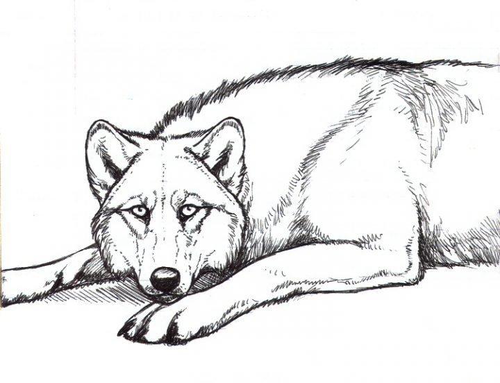 Картинка волк в тулупе нельзя показать