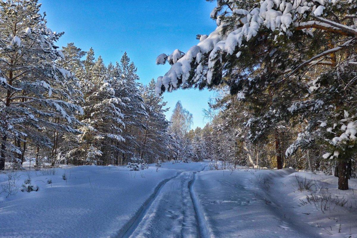 природе замиокулькас картинки зимнего леса с дорогой говорю- практиковать