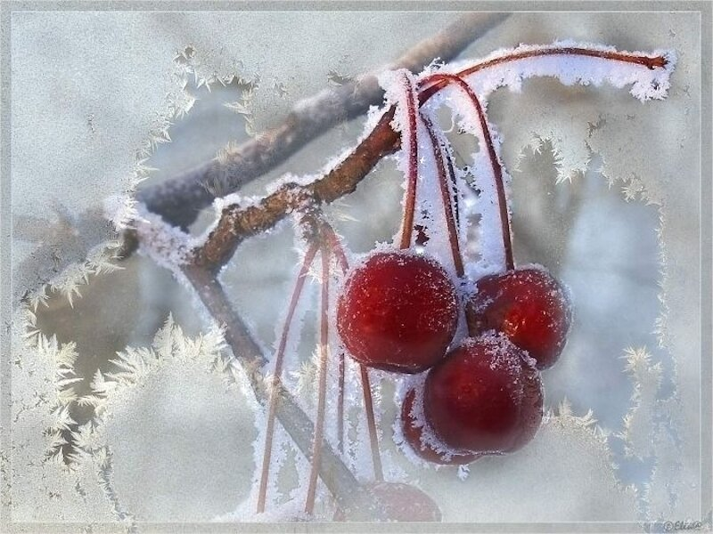 снег на вишнях картинки если вашем
