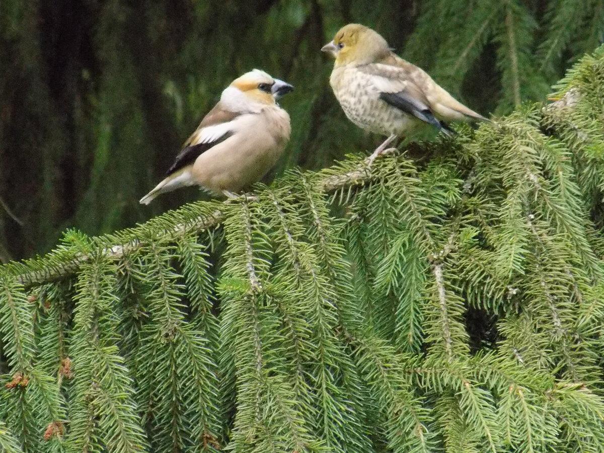 Птицы лен обл фото