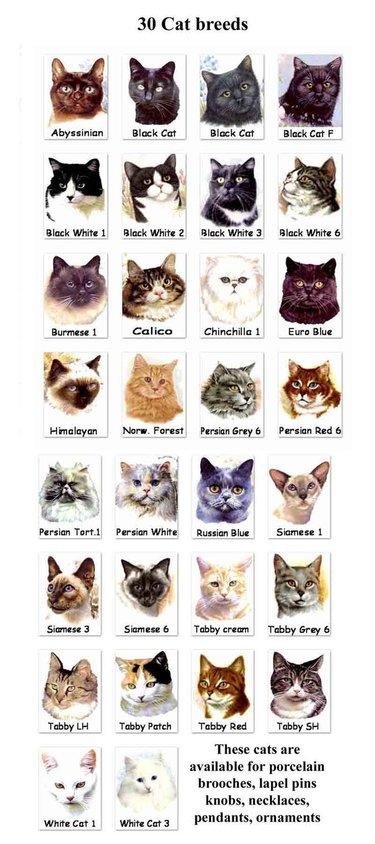 окрас кошек с фотографиями и названиями авокадо