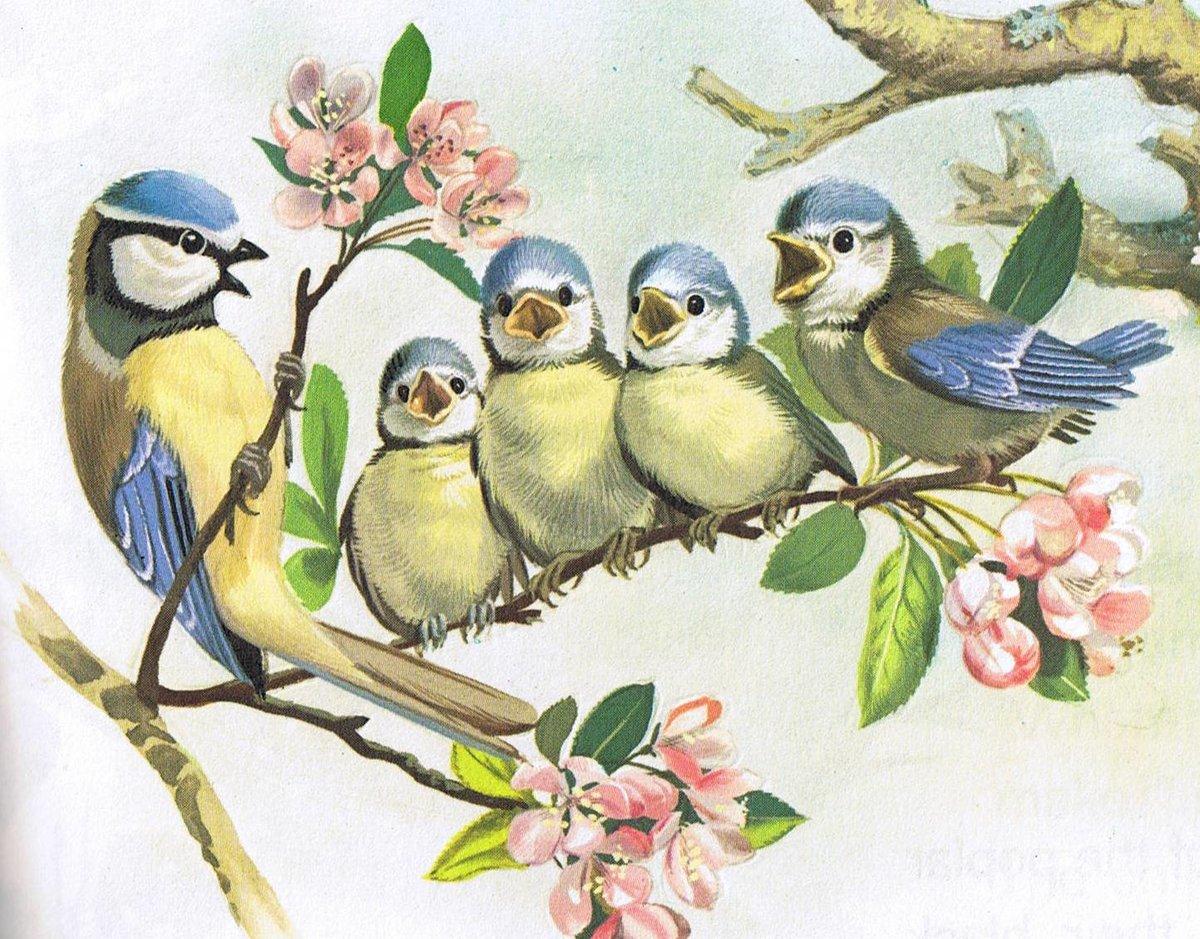 Картинки для детей птичка на ветке, юбилей свадьбы