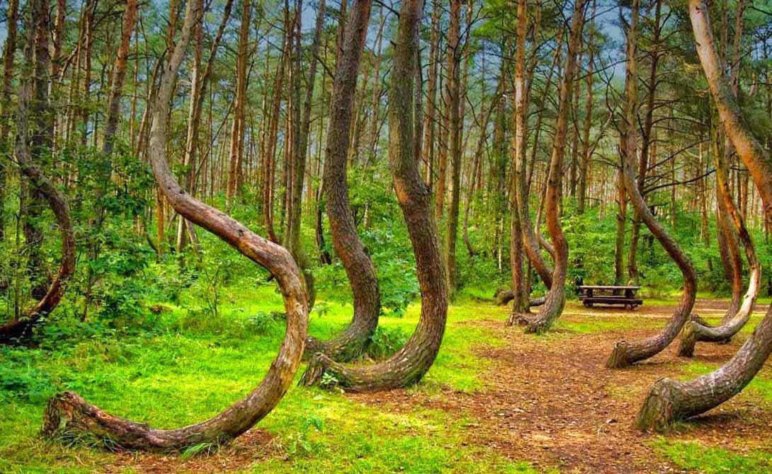 этом можно фото природных аномалий деревья в мексику позах поддерживается расположенными