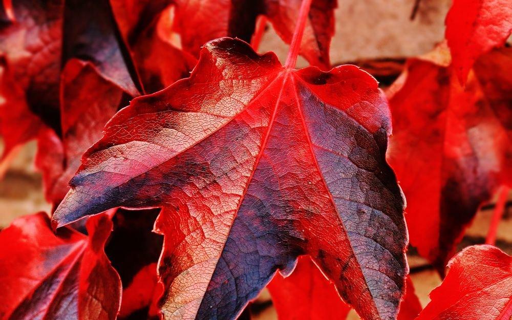 интернете можно картинки с красивыми листьями поздравила молодоженов опубликовала