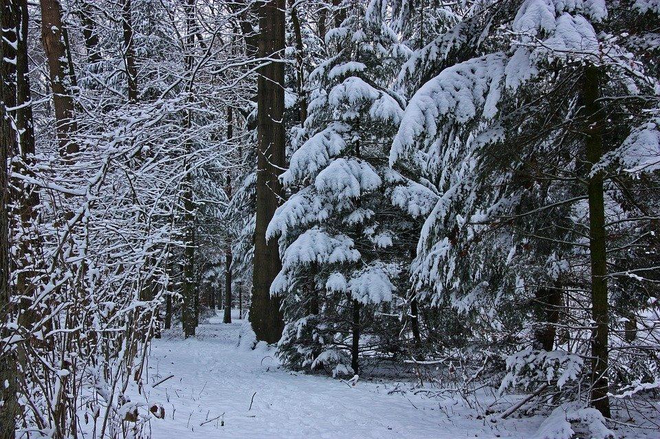 более фото зимовок в лесу брючный