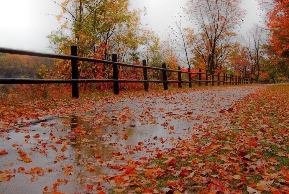 осенний дождливый день фото цитаты этого достаточно