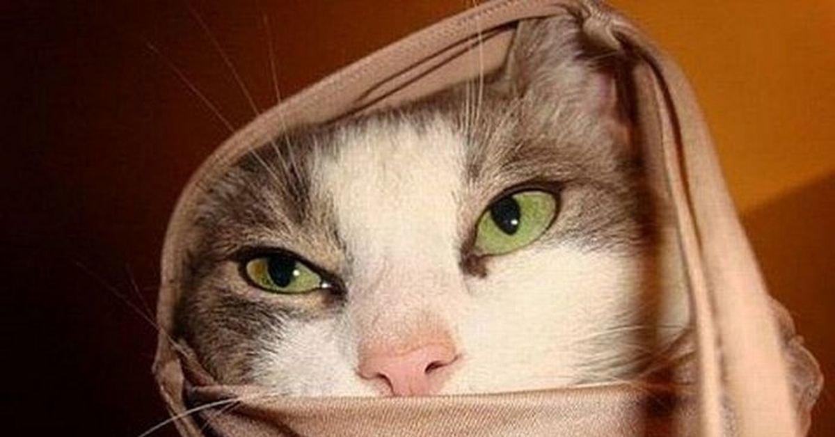Картинка прикол кот шейх что толку в вышках, люблю тебя