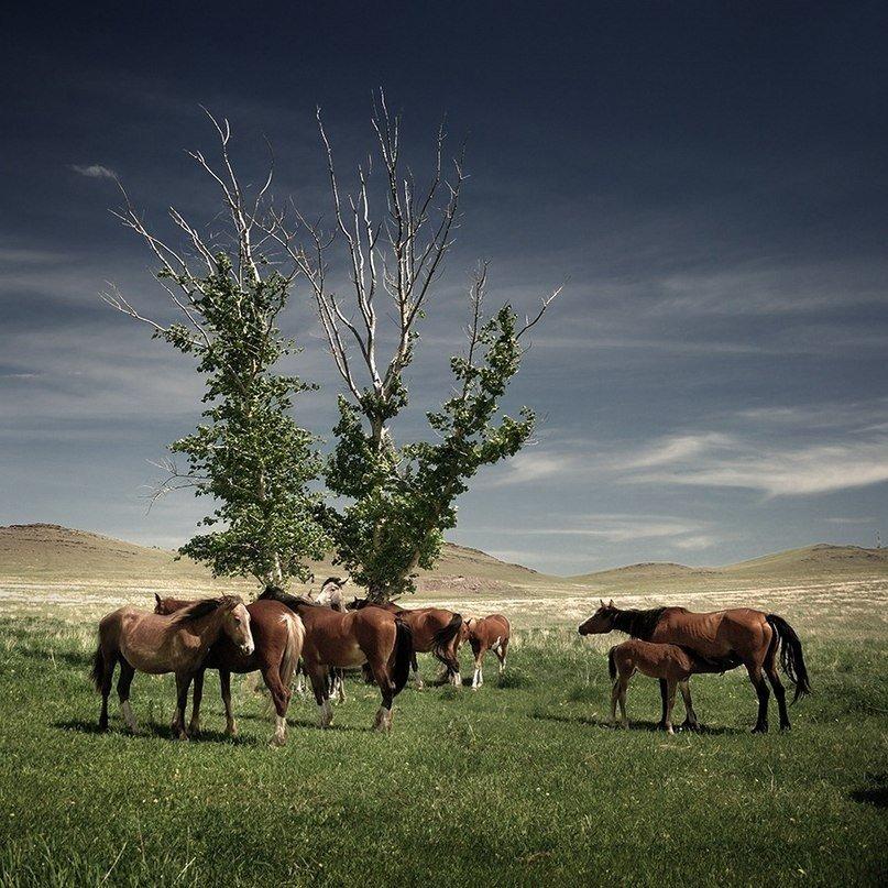 Картинки животных хакасии