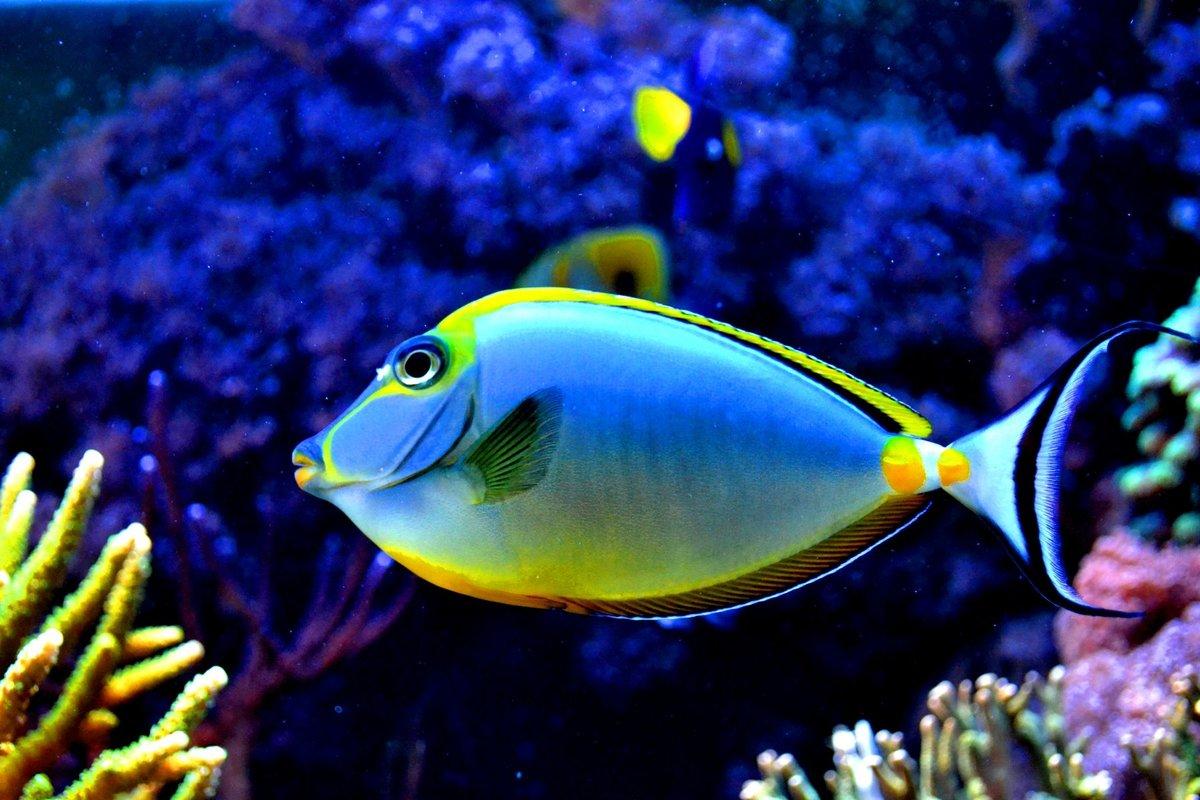 сабля собственность показать картинки рыб въезжает сзади