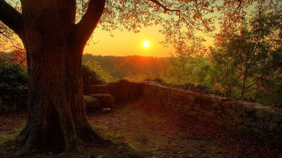 Огромное дерево, с опавшими осенними листьями, на фоне заката.