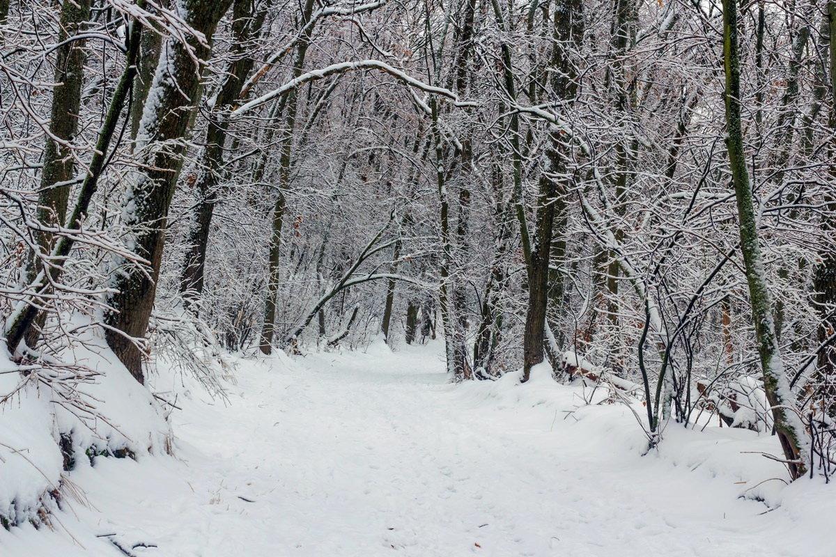 пасмурный зимний день фото для воды дачу