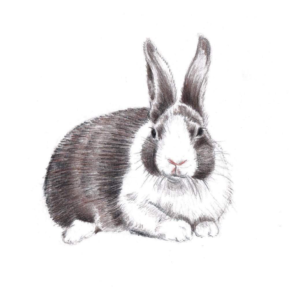 Рисунок с кроликами