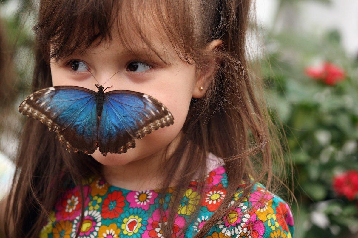 Картинки людей с бабочками