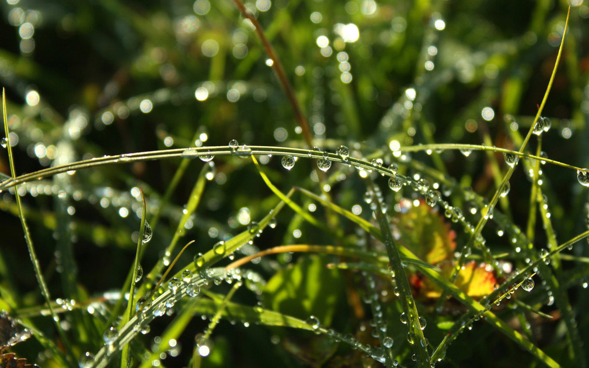 роса на траве фото картинки фотографа заказывают