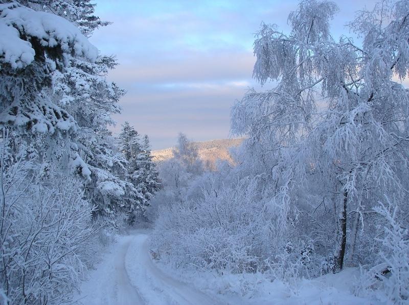Мороз в картинках