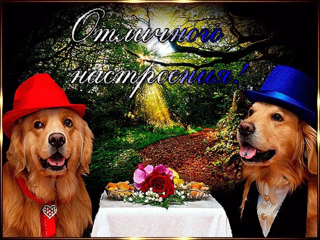 С днем друзей картинки с собаками