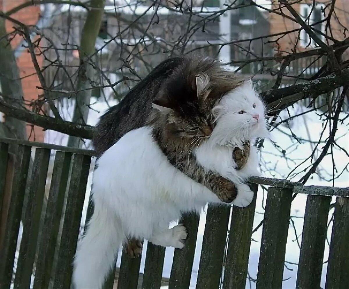 Мартовский кот картинки прикольные, видео открытка