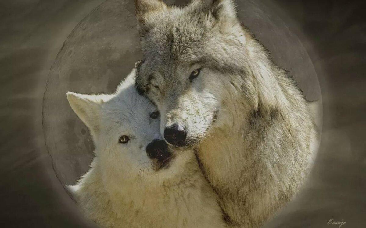 Влюбленные волки картинки красивые, открытки бабушке днем