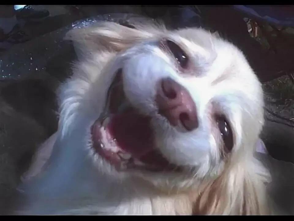 Тему выборов, смешные картинки видео про животных до слез смотреть онлайн