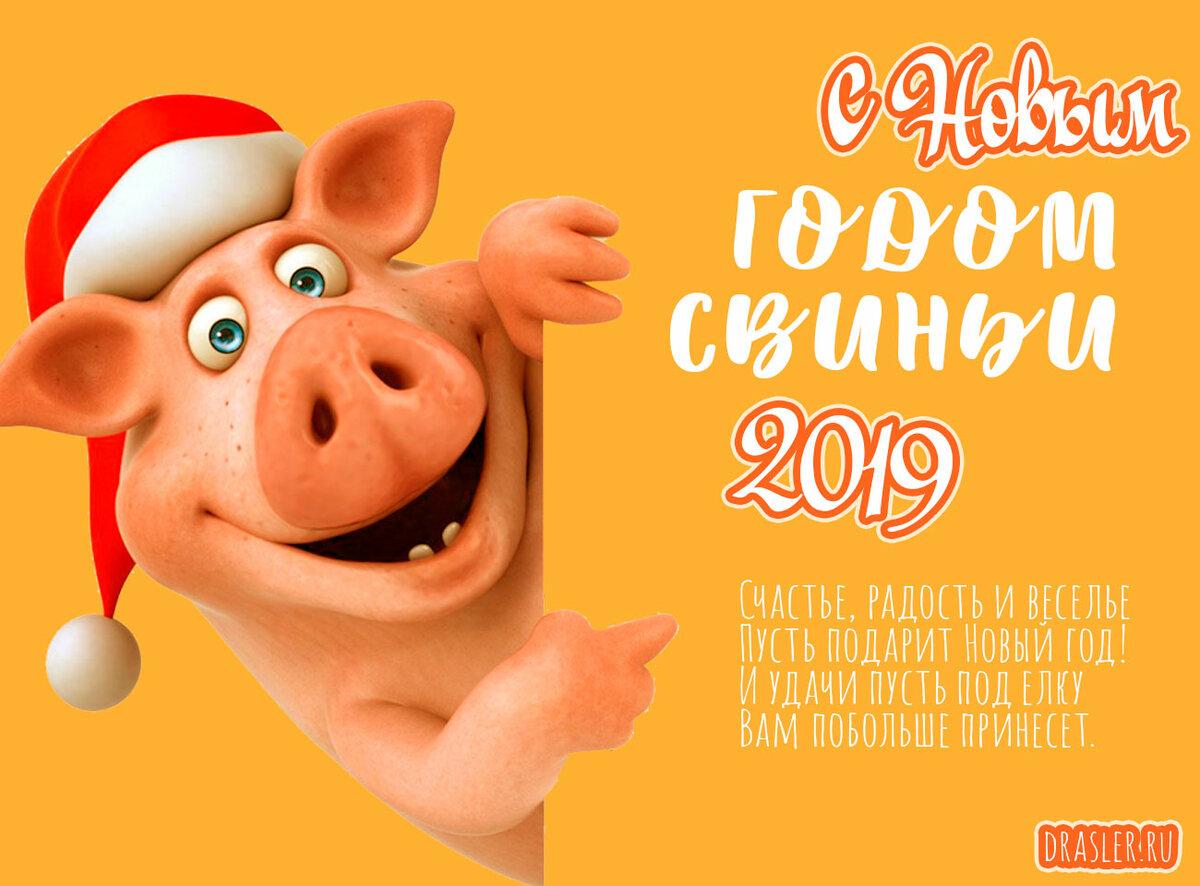 Открытка поздравление с годом свиньи, картинки прикольными
