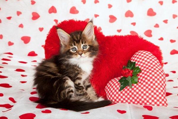 Картинки смешные, открытки с кошками на день святого валентина