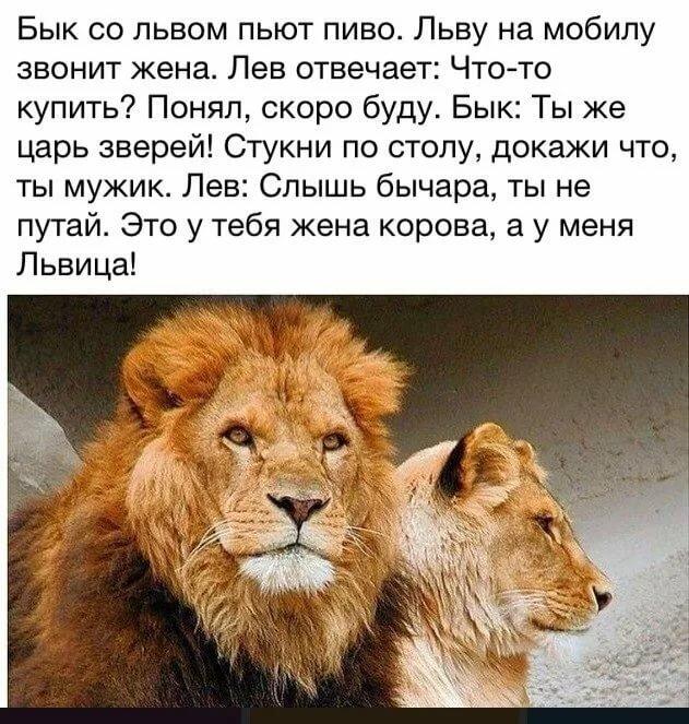 стихи мужчина лев фотографа