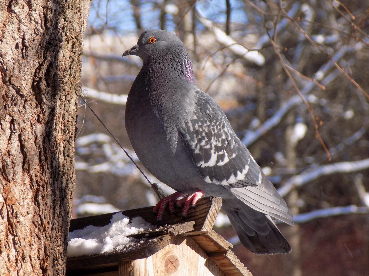Лесные птицы фото с описанием ломоносовский район
