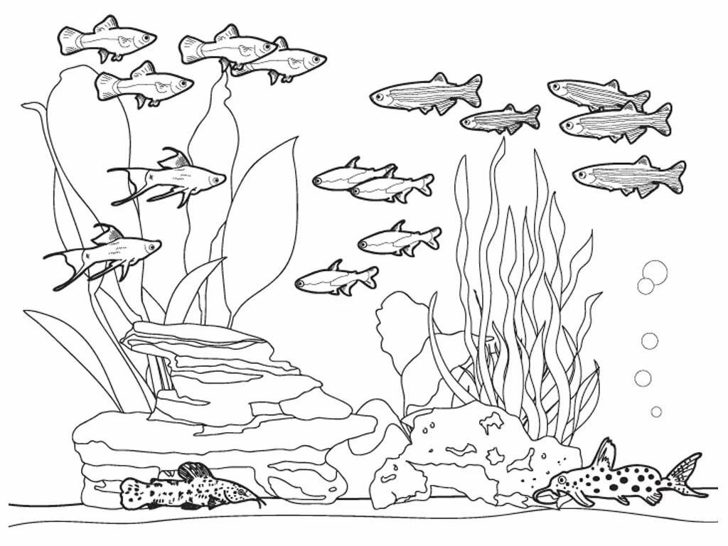 Аквариум рисунки карандашом