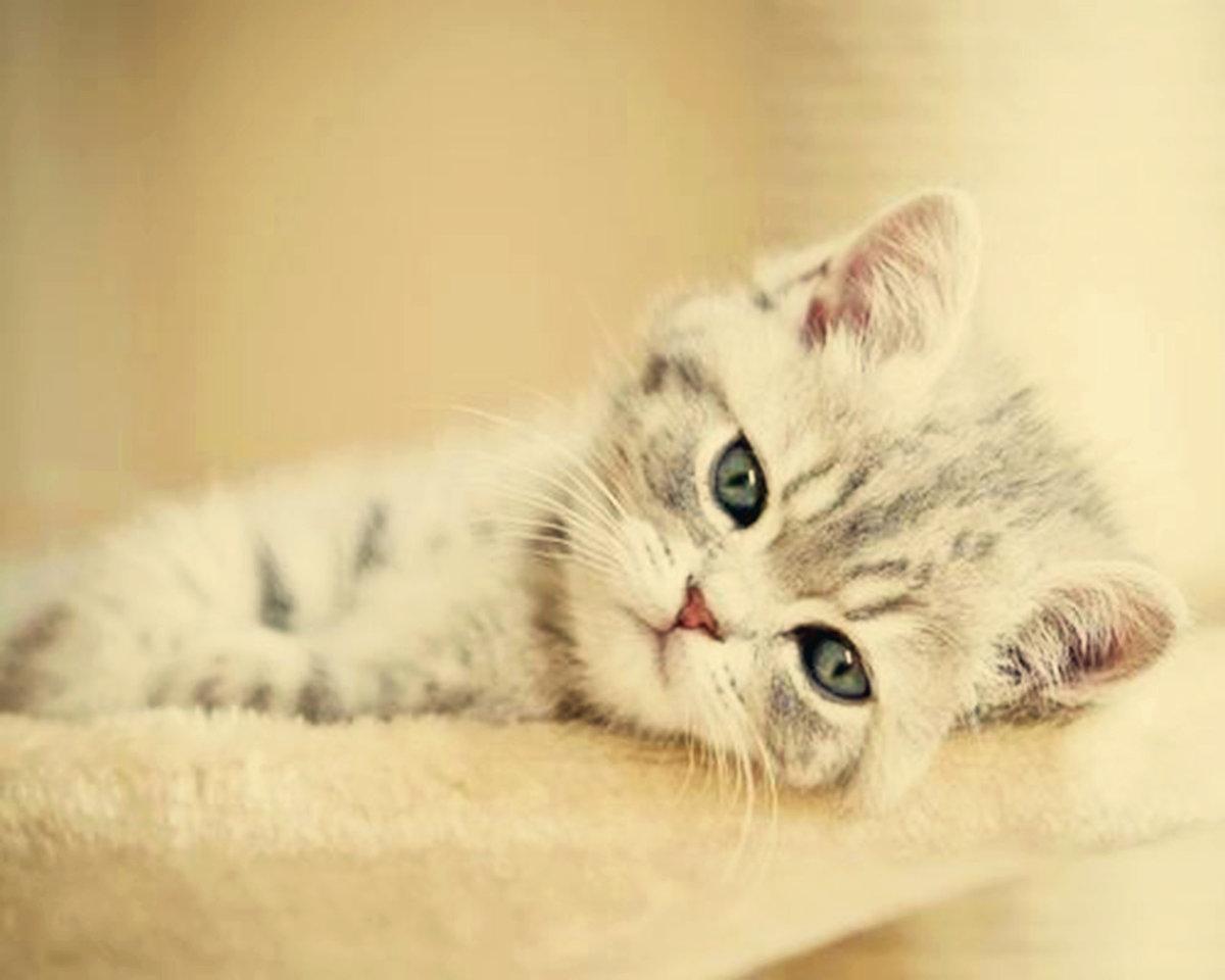 Фон, котята с надписями скучаю картинки