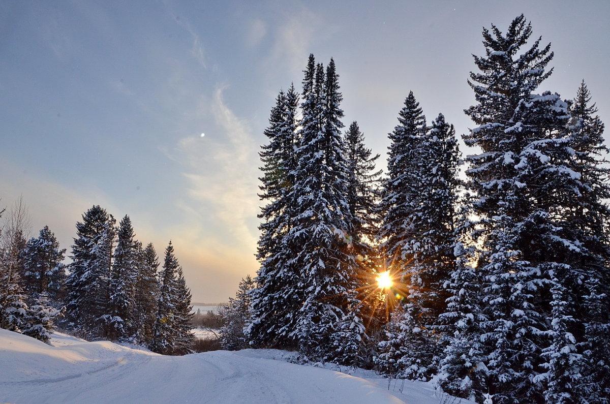 Цветами подарить, зимние картинки доброго утра
