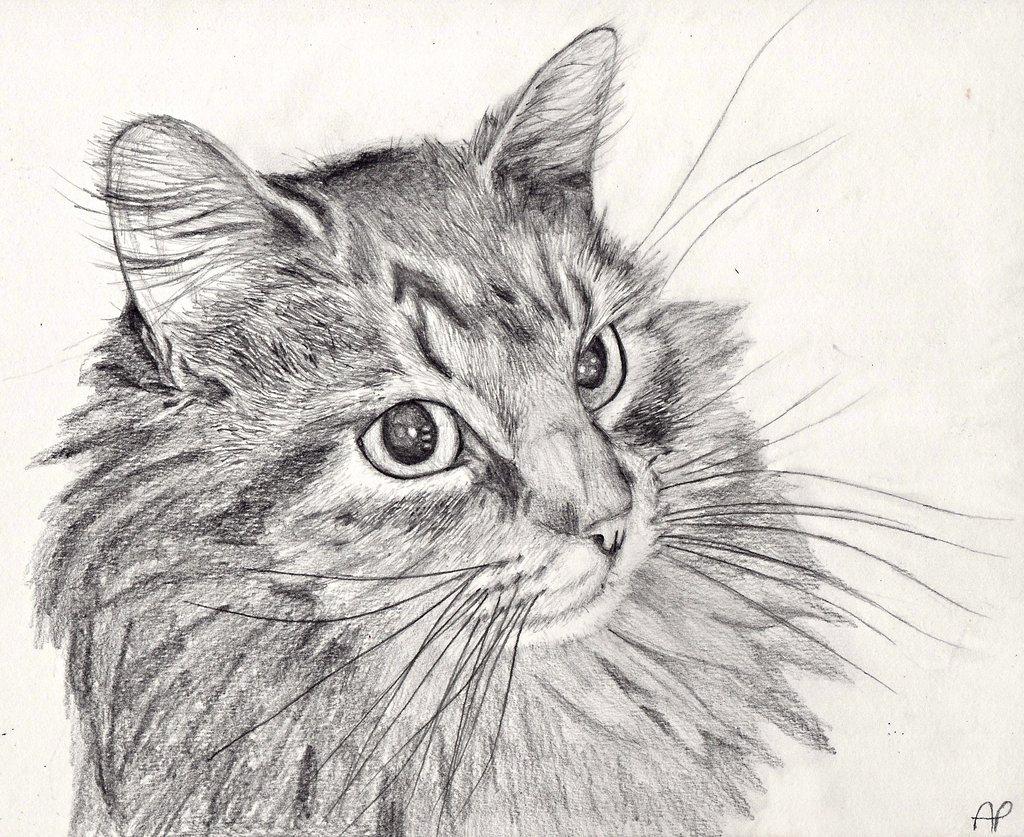 Кошки рисунок карандашом, кактусами смешные