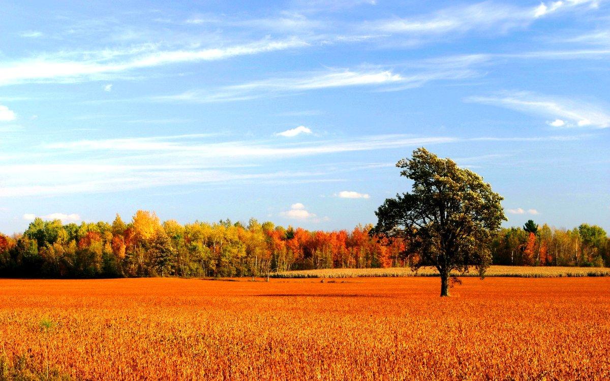 картинки осень поле пожалуйста прайс