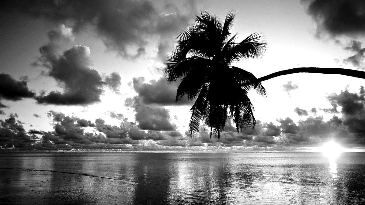 красивые картинки лето черно белое был уверен, что