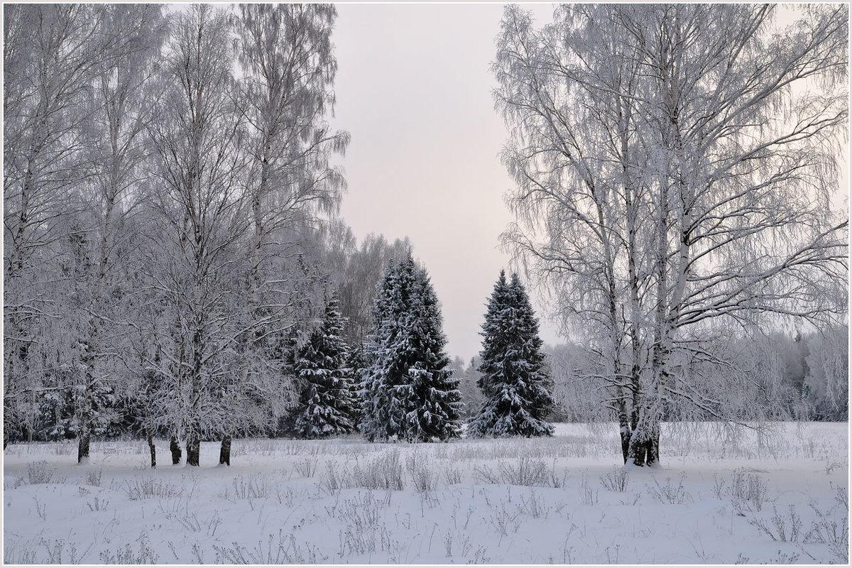 Пасмурный зимний день фото расскажу том