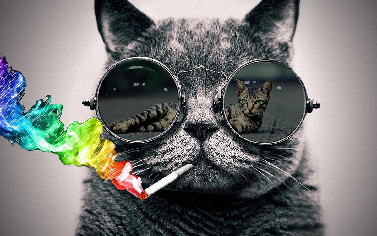 Картинки крутые с котом