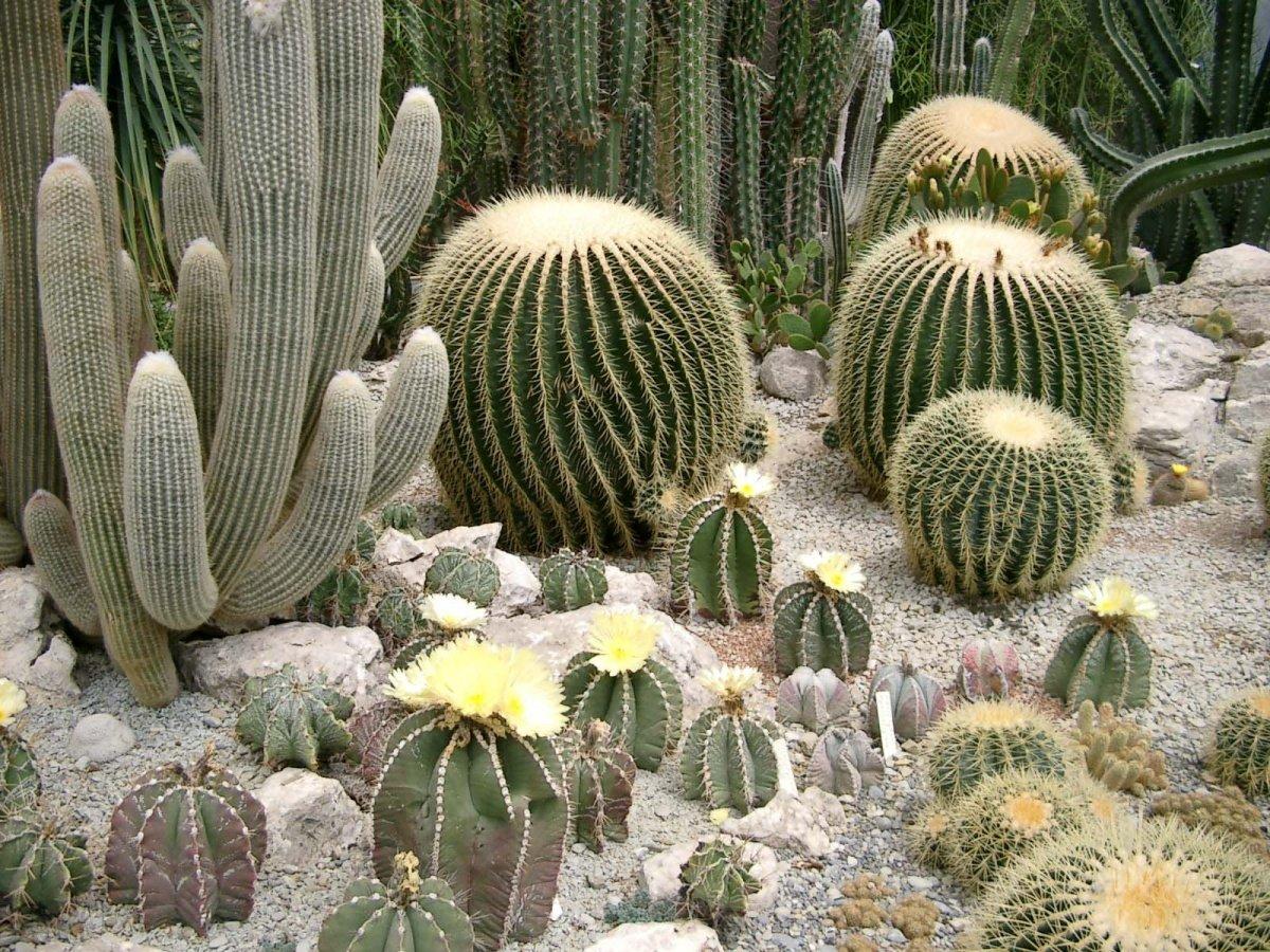 Восточные приправы растения название и фото мог пропустить