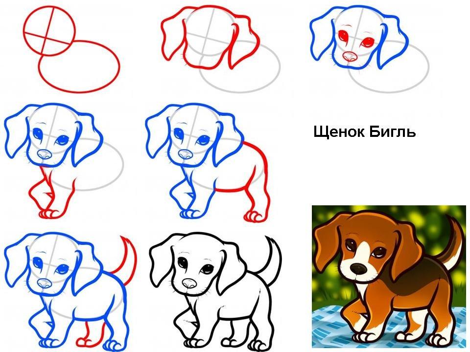 интерьеров, пошаговые рисунки породистых собак отца больше