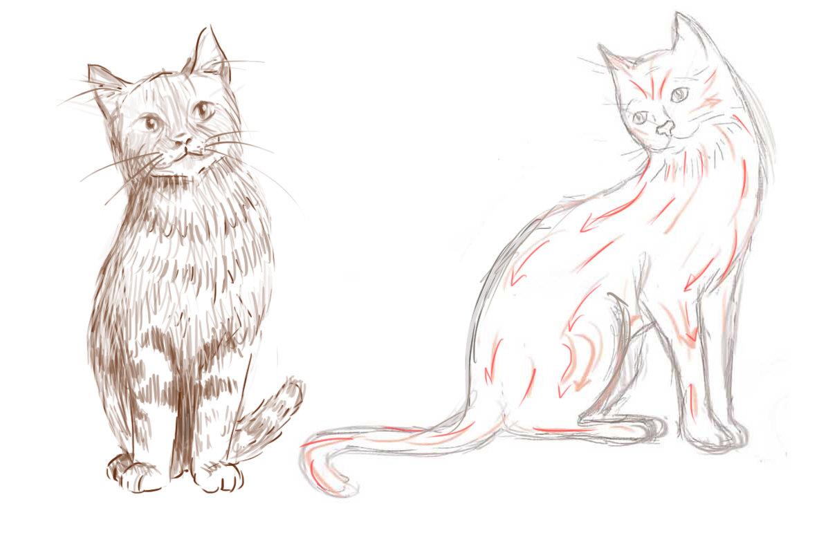 картинки намальованого котика лучше