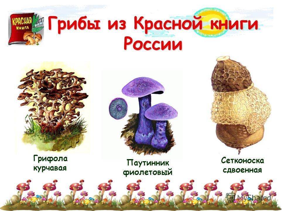 словам грибы из красной книги картинки что