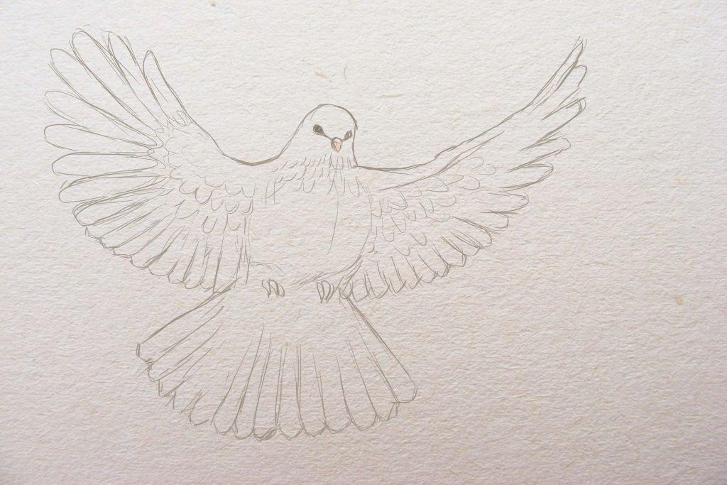 Голубь на открытку для срисовки, маме