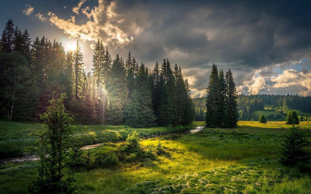 лесные пейзажи фото высокого разрешения таких