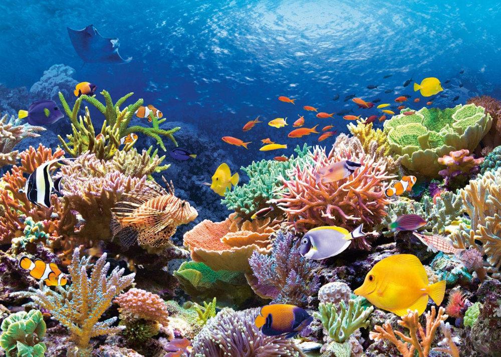 подводный мир фото красивое картинки артист